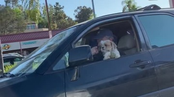 Doggo Loses Favorite Ball While Driving
