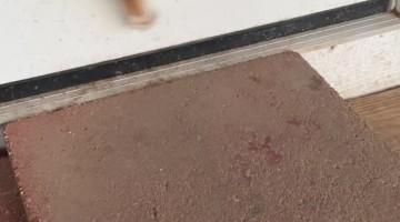 Puppy's Doggie Door Triumph