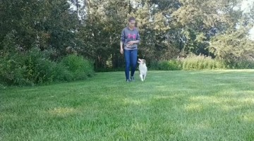 Vixey the Amazing Trick Dog