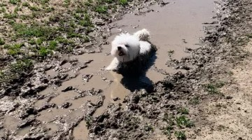 Happy Pooch Cools Off in Mud Puddle