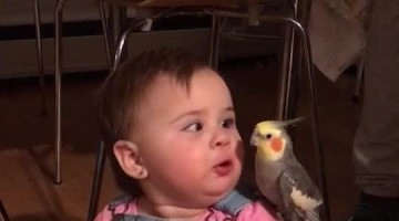 Little Girl Plays with Bird Buddy