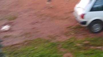 Dog Takes Slackline In Stride