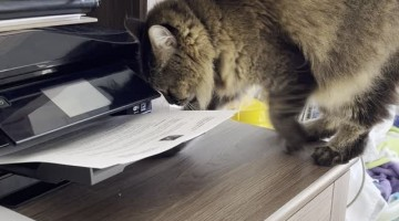 Printing Paper Keeps Kitty Occupied