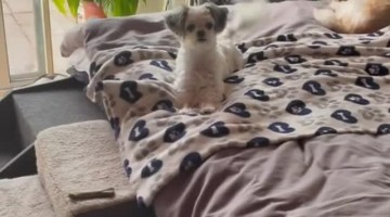 Dog Does Adorable Treat Dance