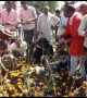 Children tossed in cow dung for good luck during Hindu festival