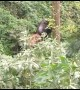 Elephant separated from herd strikes unlikely friendship with Indian bison