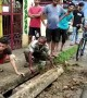 Touching moment terrified puppies are reunited with mother after getting stuck in drain