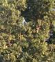 Large Flock of Birds Take Off Together