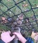 Man Frees Rabbit Trapped in Fence