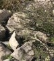 Mountain Goat Rescued from Rock Crevice