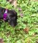Barking at Butterflies