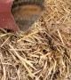 Chipmunk Rescued from Downspout Dilemma