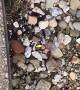Superhero Mom Saves Frog from Snake