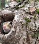 Chipmunk Comes Back for Close-Up