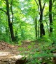 Airwalk Through the Forest
