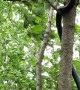 Snake Climbs Tree During Windy Storm