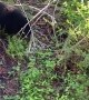 Bear Family Stops in to Visit Family Cabin