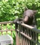 Gatlinburg Bear Licks Grill